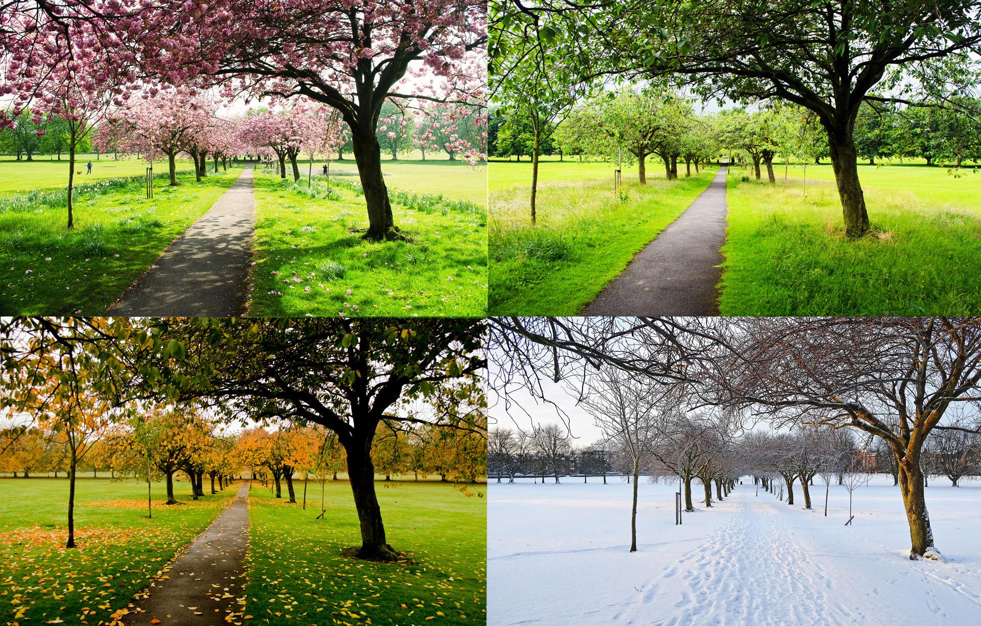 Tree_4 Seasons