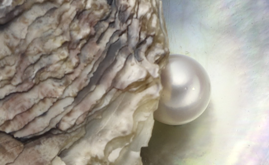 pearl and shell