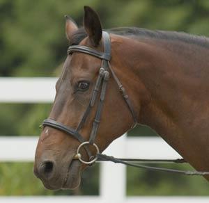horsebridle-equineworld-couk